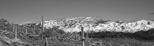 Ilmainen kuvapankkikuva tunnisteilla aavikko, arizona, järvi miellyttävä, kaktus