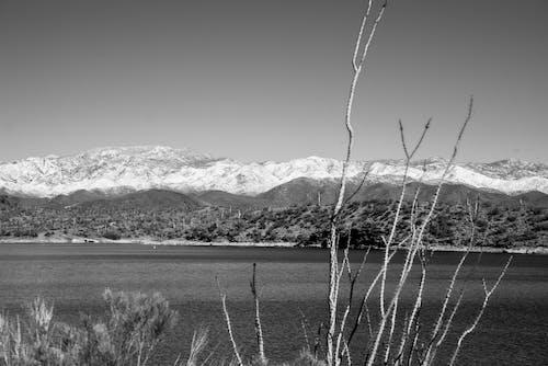 Free stock photo of arizona, cactus Snow, destination