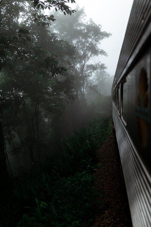 Grey Train Traveling on Foggy Woods