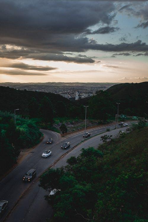 arbres, asfalt, autopista