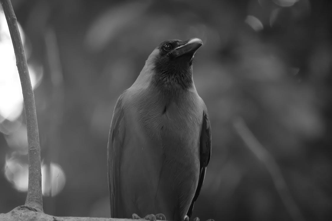 Gray Small Beaked Bird on Tree