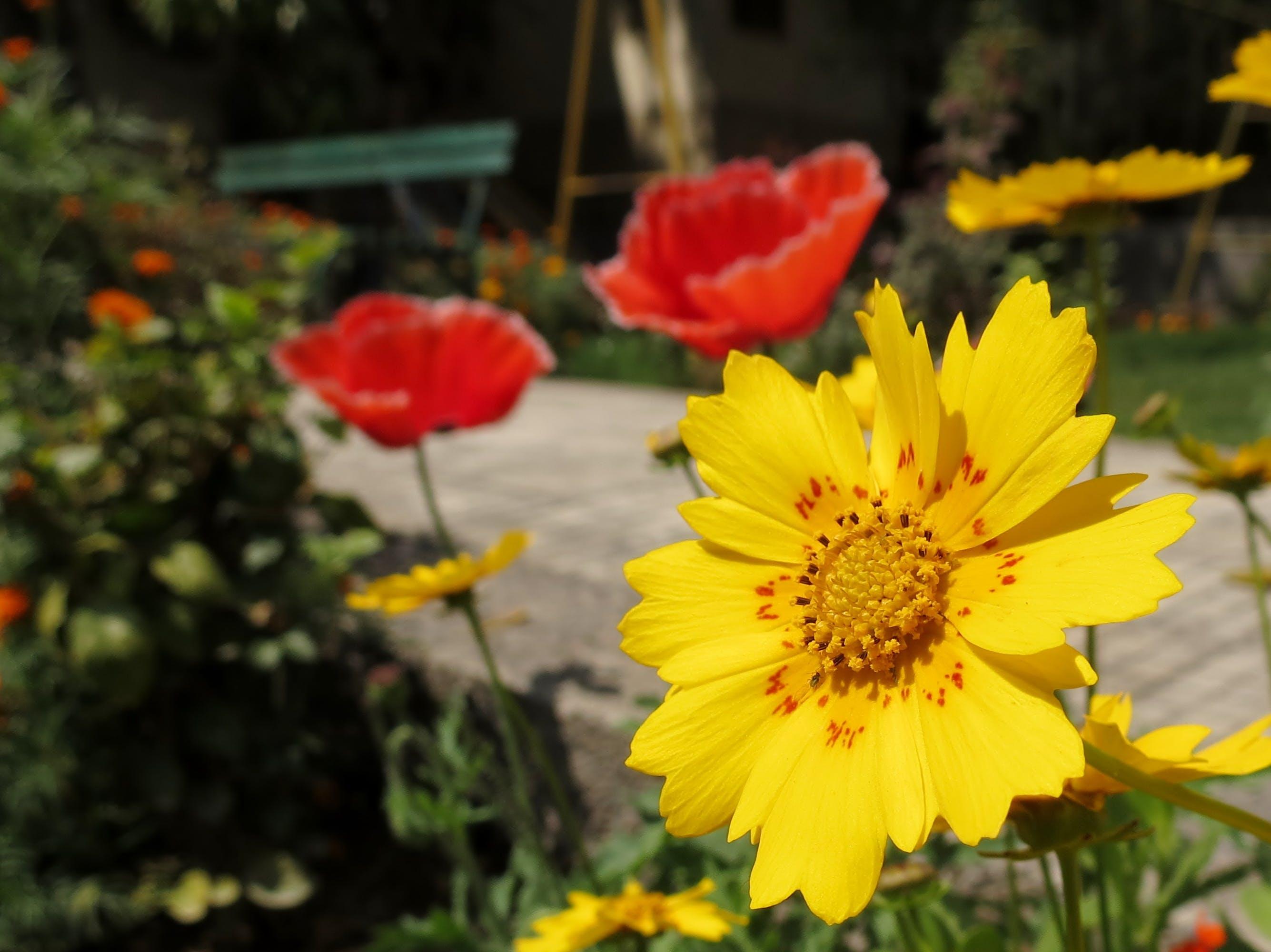 Foto profissional grátis de flores bonitas