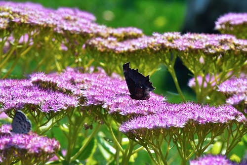 Základová fotografie zdarma na téma krásné květiny, motýl