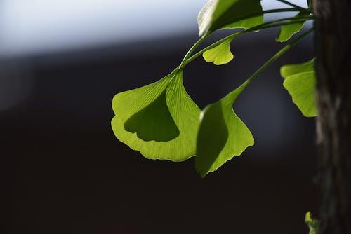 Photos gratuites de feuille verte