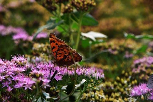 Gratis arkivbilde med sommerfugler