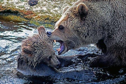Free stock photo of water, animal, wilderness, bear