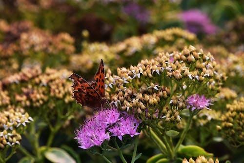 Základová fotografie zdarma na téma motýl