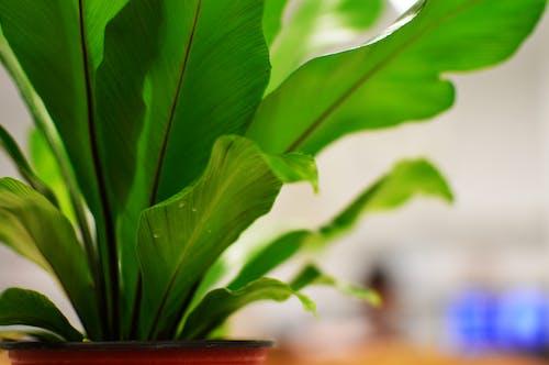 植物, 緑の無料の写真素材