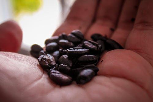 Gratis lagerfoto af cafe