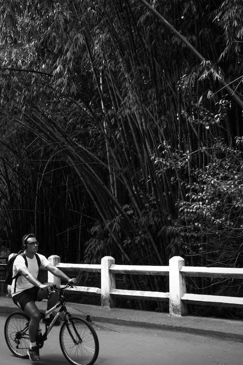 Gratis lagerfoto af cyklist