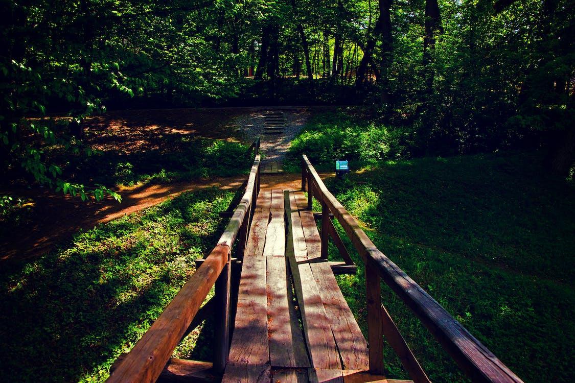 Brown Wooden Bridge Near Forest during Golden Hour