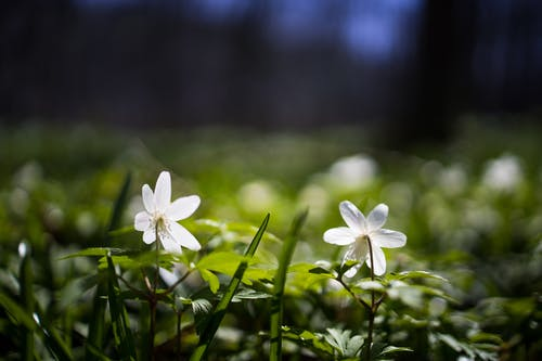 White-petaled Flower on Selective Focus Photography