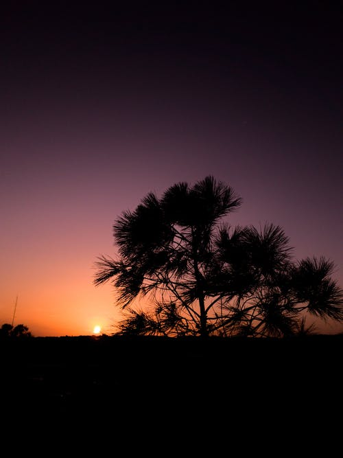 Silhouette Of Tree During Dawn