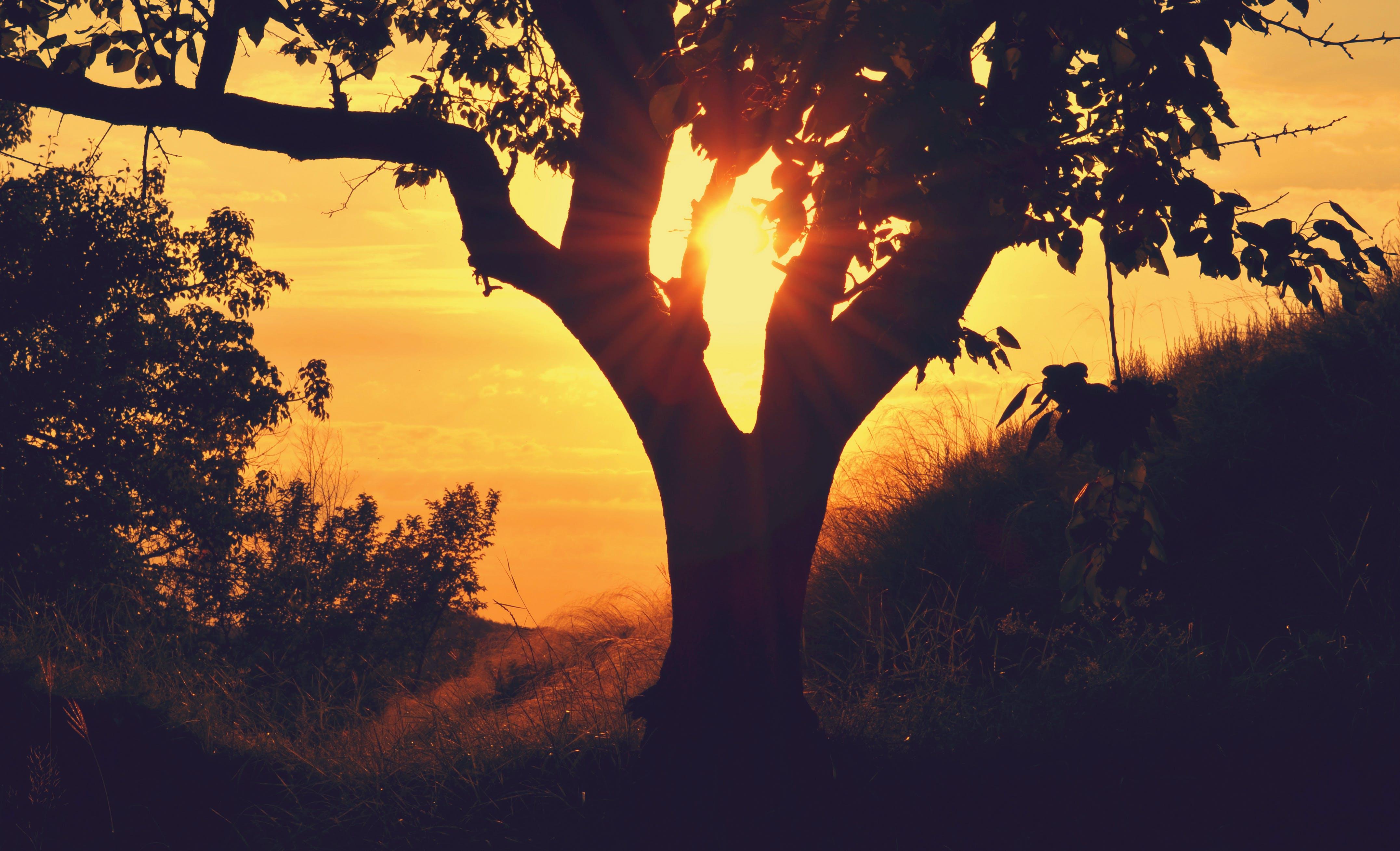 bough, hill, silhouette