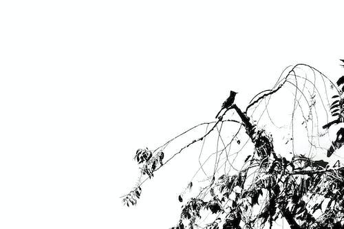Fotos de stock gratuitas de animal, animales monos, aves del paraíso, observación de aves