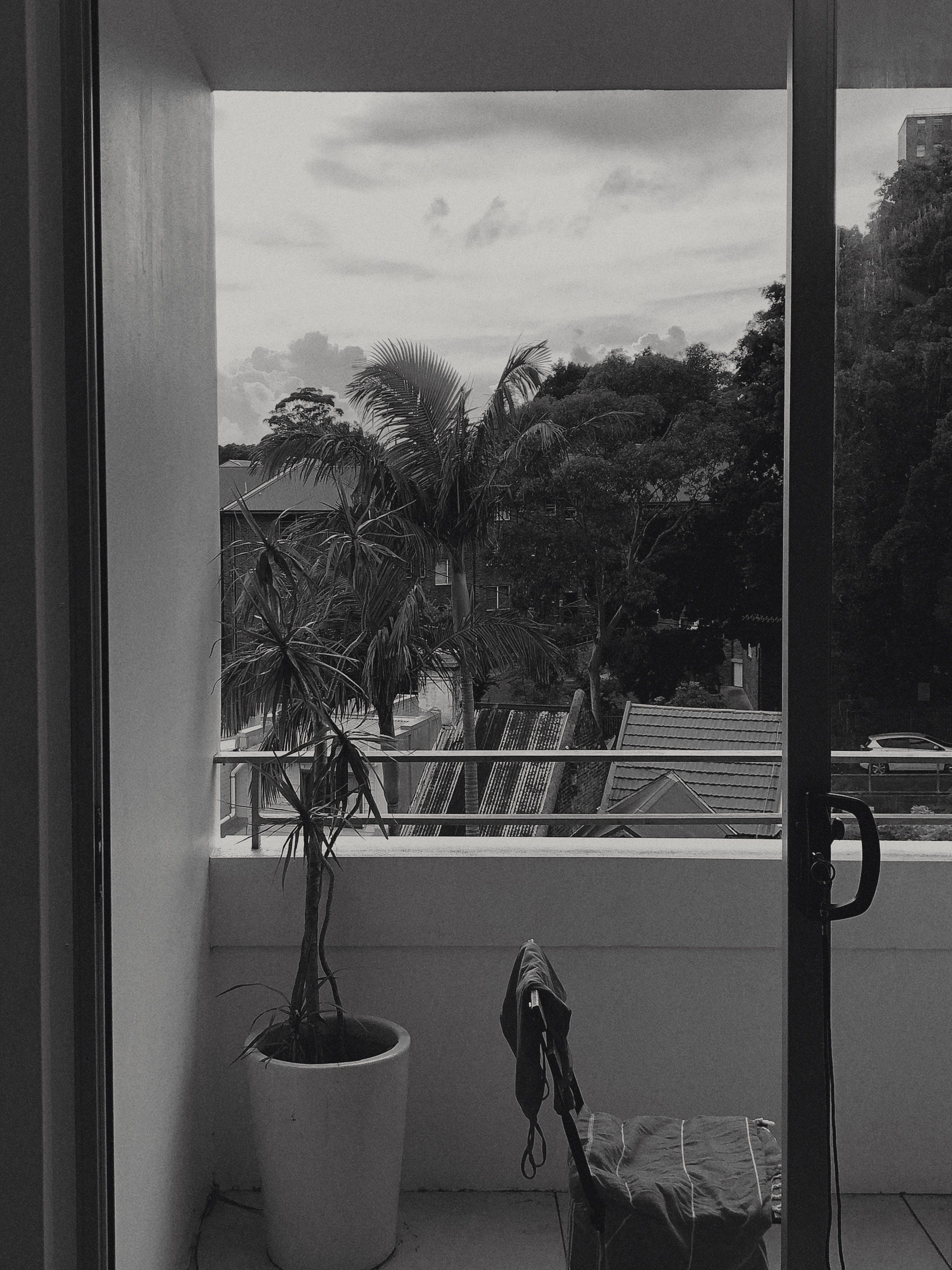 Grayscale Photo of Potted Plant