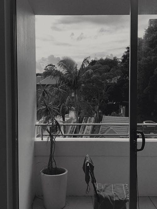 คลังภาพถ่ายฟรี ของ กระถาง, กลางวัน, ต้นไม้, ประตูบานเลื่อน