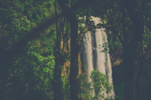 Безкоштовне стокове фото на тему «Водоспад»