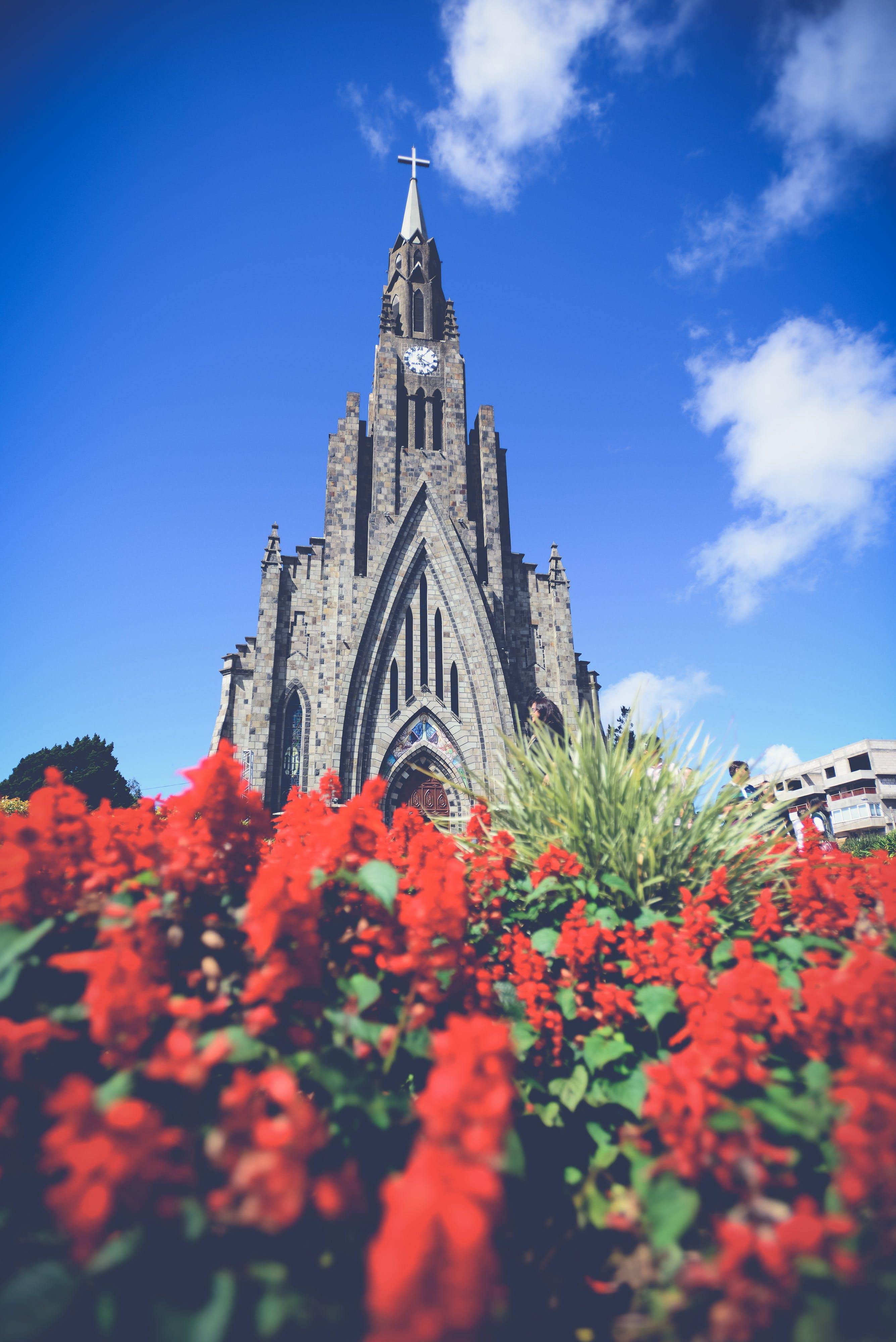 Gratis lagerfoto af arkitektur, basilika, blomster, by