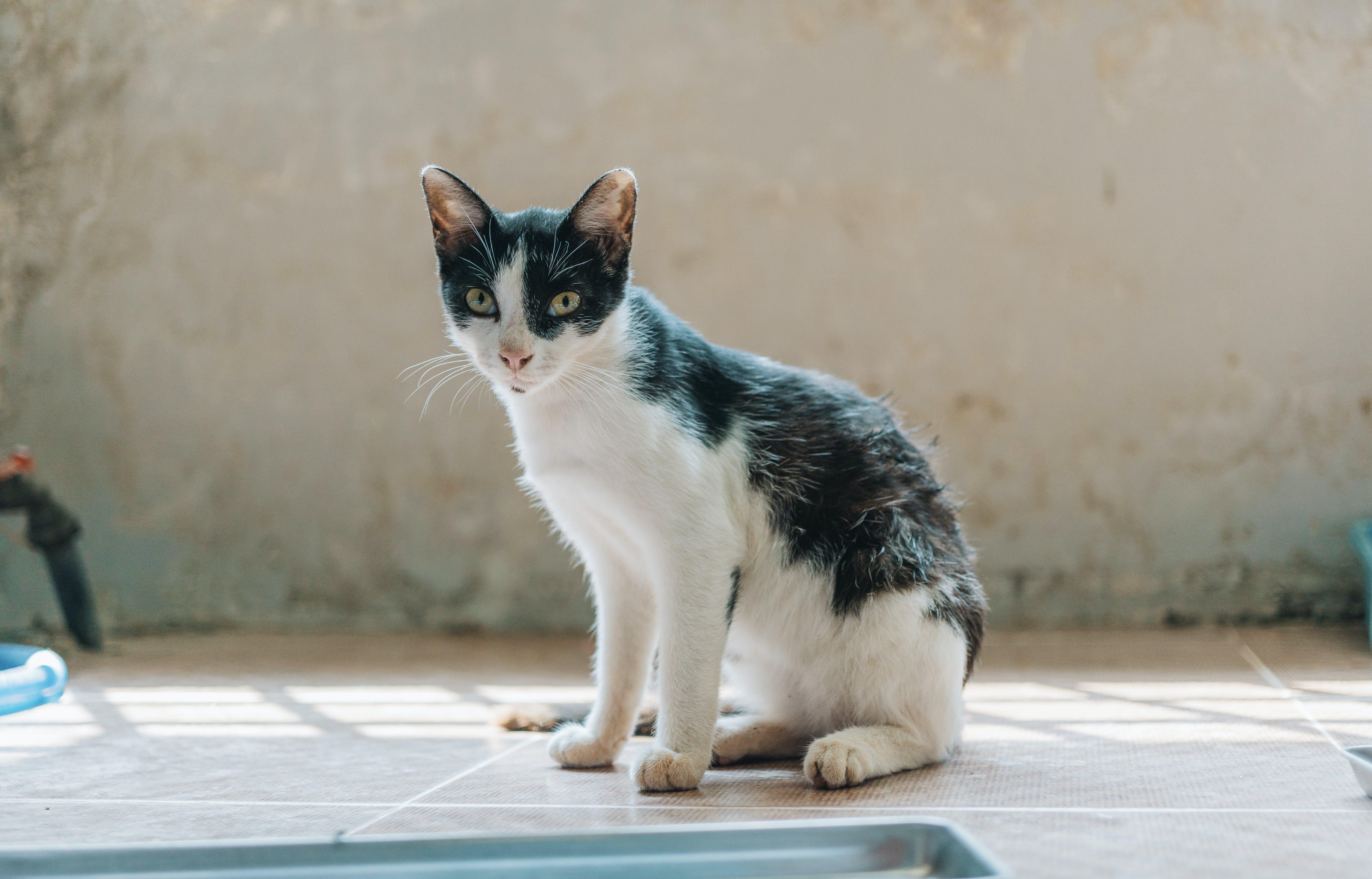 가정의, 고양이, 고양이 눈, 고양이 얼굴의 무료 스톡 사진