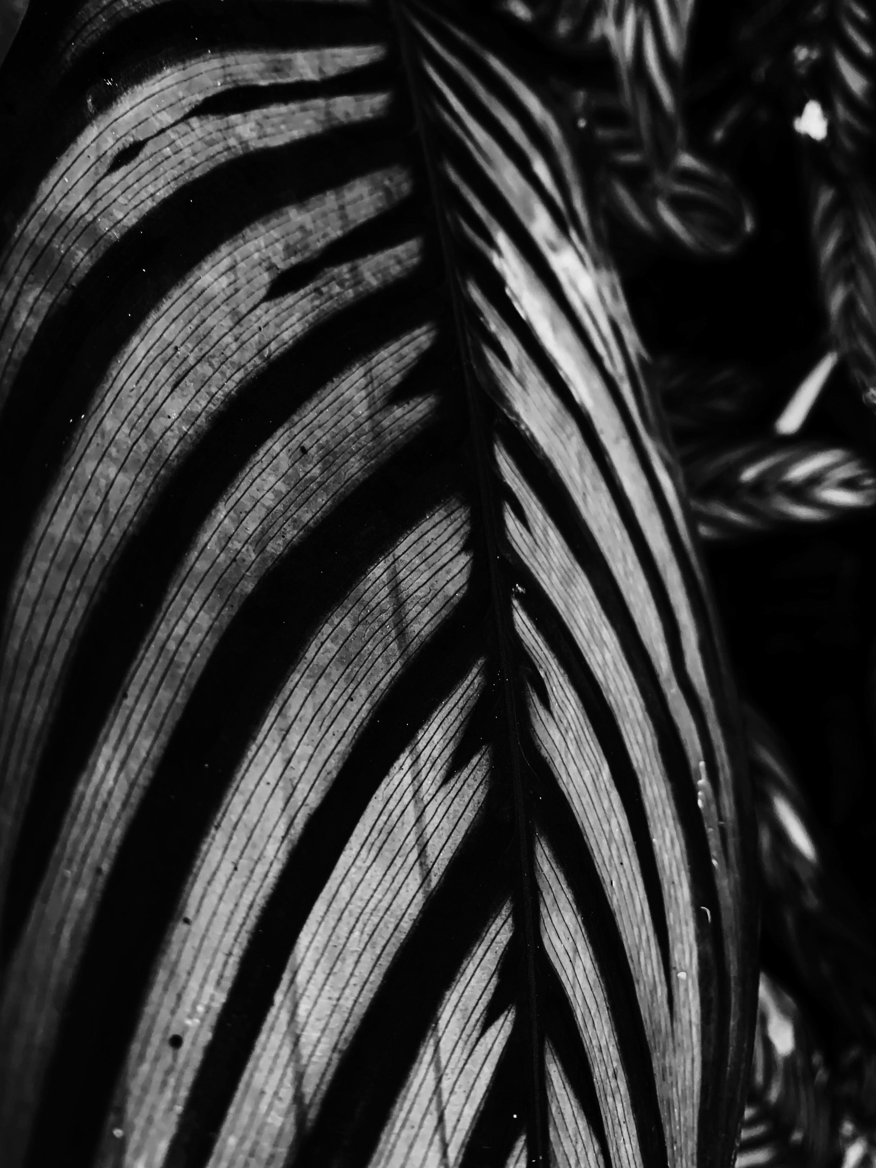 Black and White Photo Of A Leaf