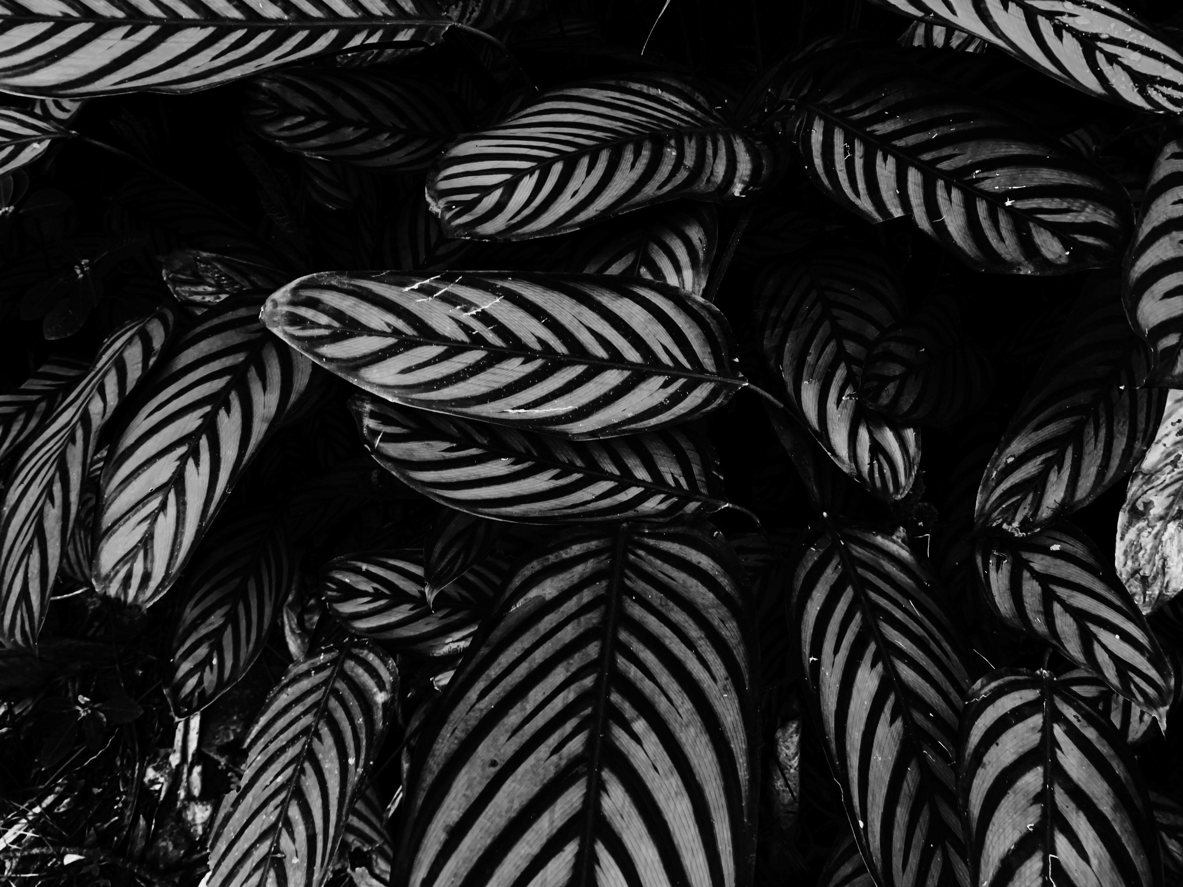 Free stock photo of background, beautiful, beauty, black and white