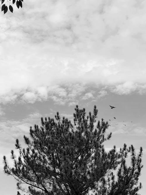 Monochrome Photo of Tree