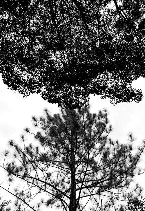 Monochrome Photography of Trees