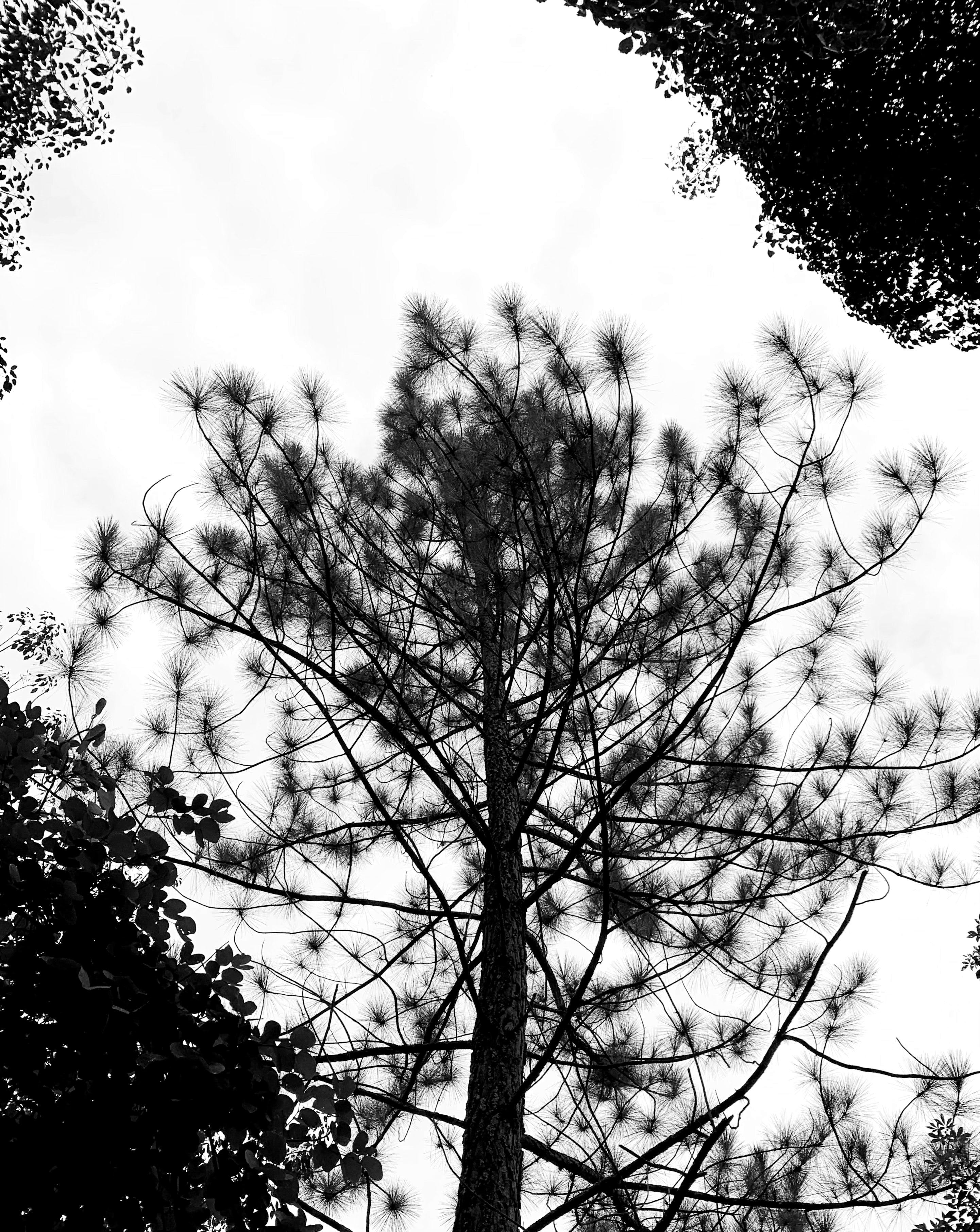 Monochrome Photo of Tree and Leaves
