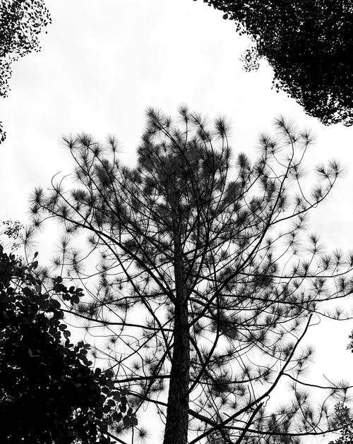 Foto stok gratis alam, batang pohon, bidikan sudut sempit, brasil