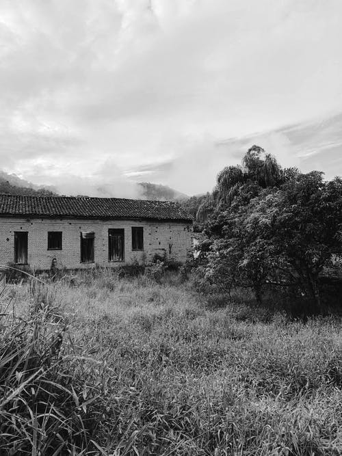 Grayscale Photography of Trees Beside House