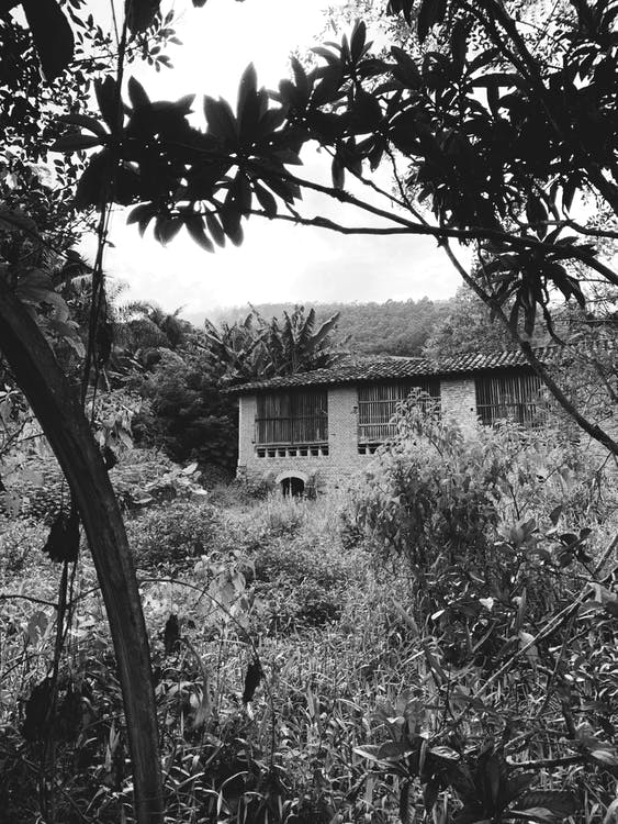 arboles, arquitectura, blanco y negro