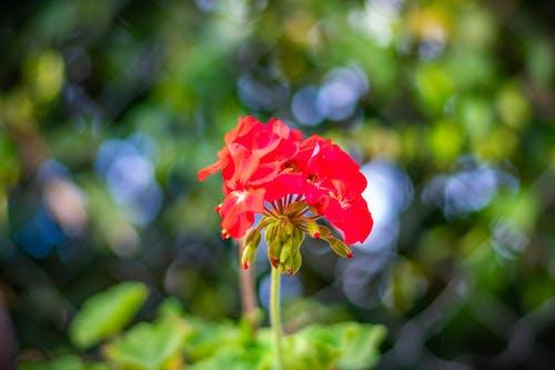 Foto profissional grátis de buquê, flor bonita, natureza, retrato