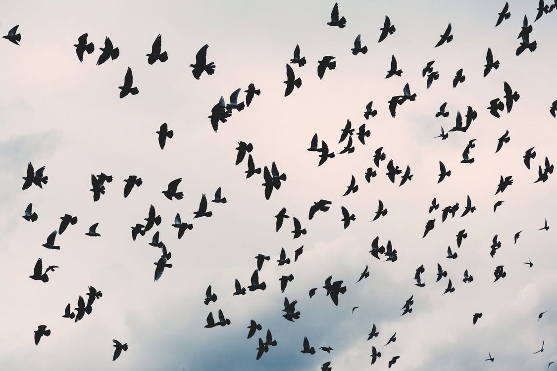 Flock of Black Birds Under White Cloudy Sky