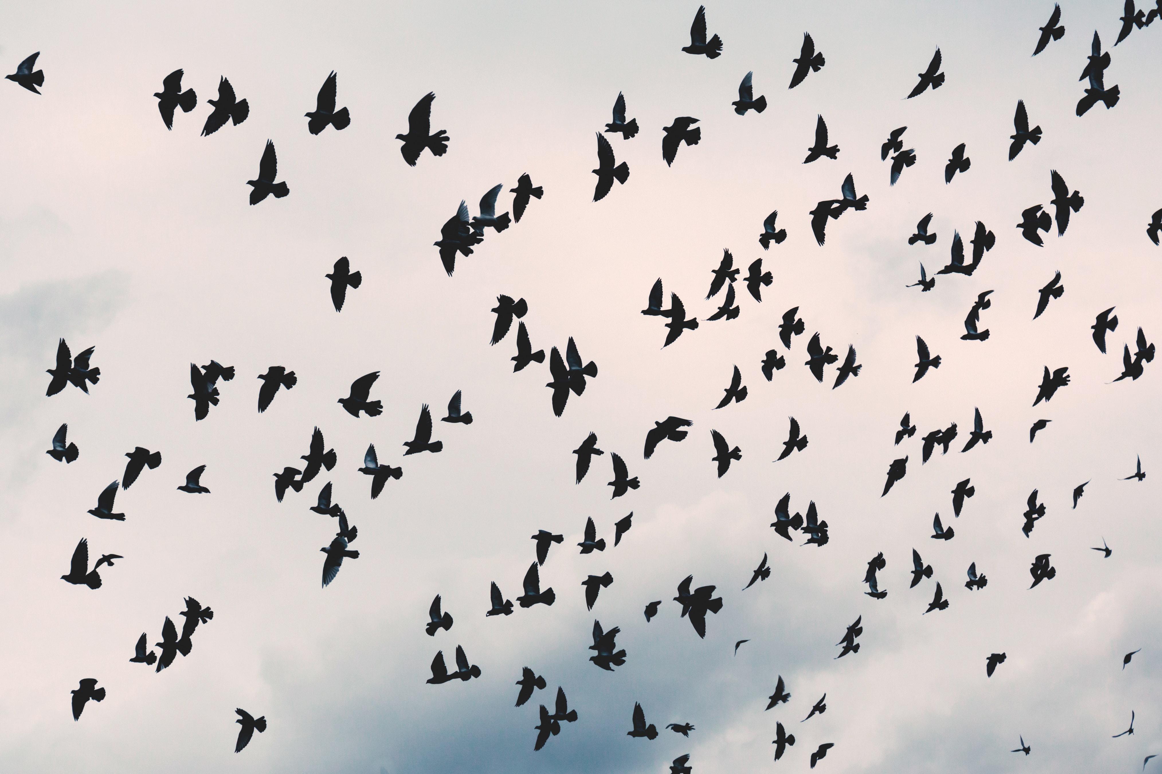 Wallpapers Hd Flying Birds Apple Animals Blue Sky Desktop: 507 Colorful Bird Pictures · Pexels · Free Stock Photos