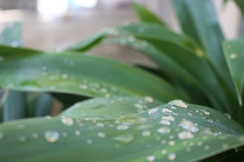 Бесплатное стоковое фото с зеленый, капельки воды, пальмовые листья, природа