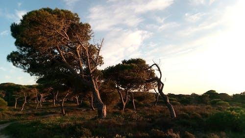 天性, 天空, 懸崖, 風 的 免费素材照片