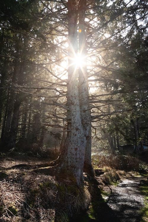 bomen, boomstammen, boomtakken
