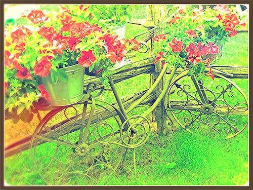 Imagine de stoc gratuită din floare, gard