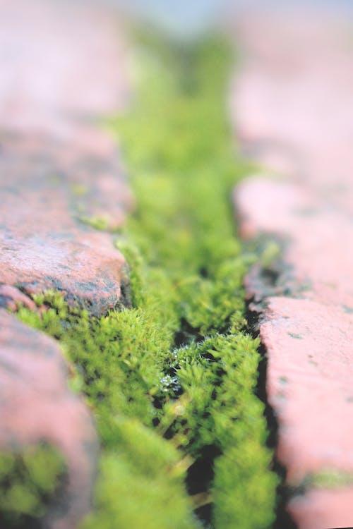 Бесплатное стоковое фото с зеленый мох, кирпичная мостовая, мшистые камни, природа