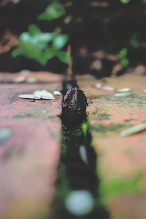 Бесплатное стоковое фото с зеленый, кирпич, Кора, макросъемка