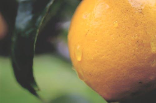 나무, 녹색, 레몬, 자연의 무료 스톡 사진