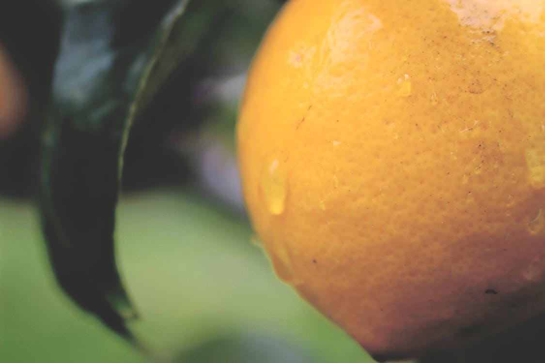 дерево, зеленый, лимон