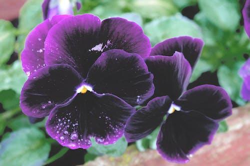 녹색, 보라색 꽃, 아름다운 꽃, 자연의 무료 스톡 사진