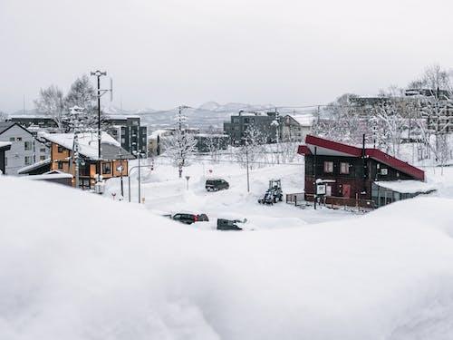 ağaçlar, buz tutmuş, dağ, don içeren Ücretsiz stok fotoğraf