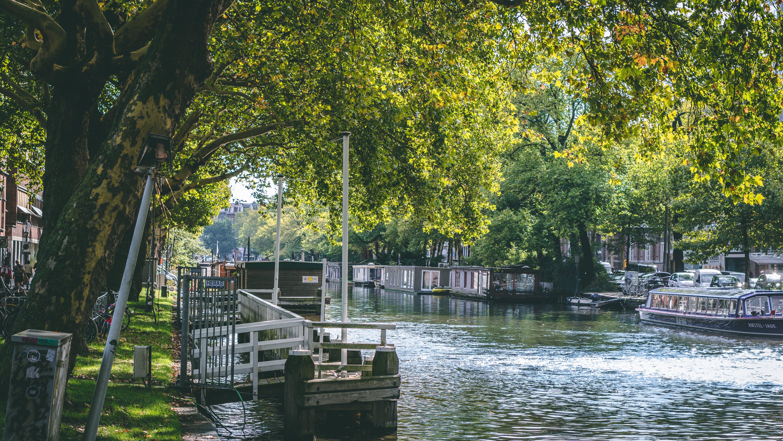 Ingyenes stockfotó csatorna, fák, festői, hajóm csónak témában