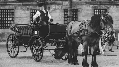 Základová fotografie zdarma na téma černobílý, doprava, dopravní systém, hříva