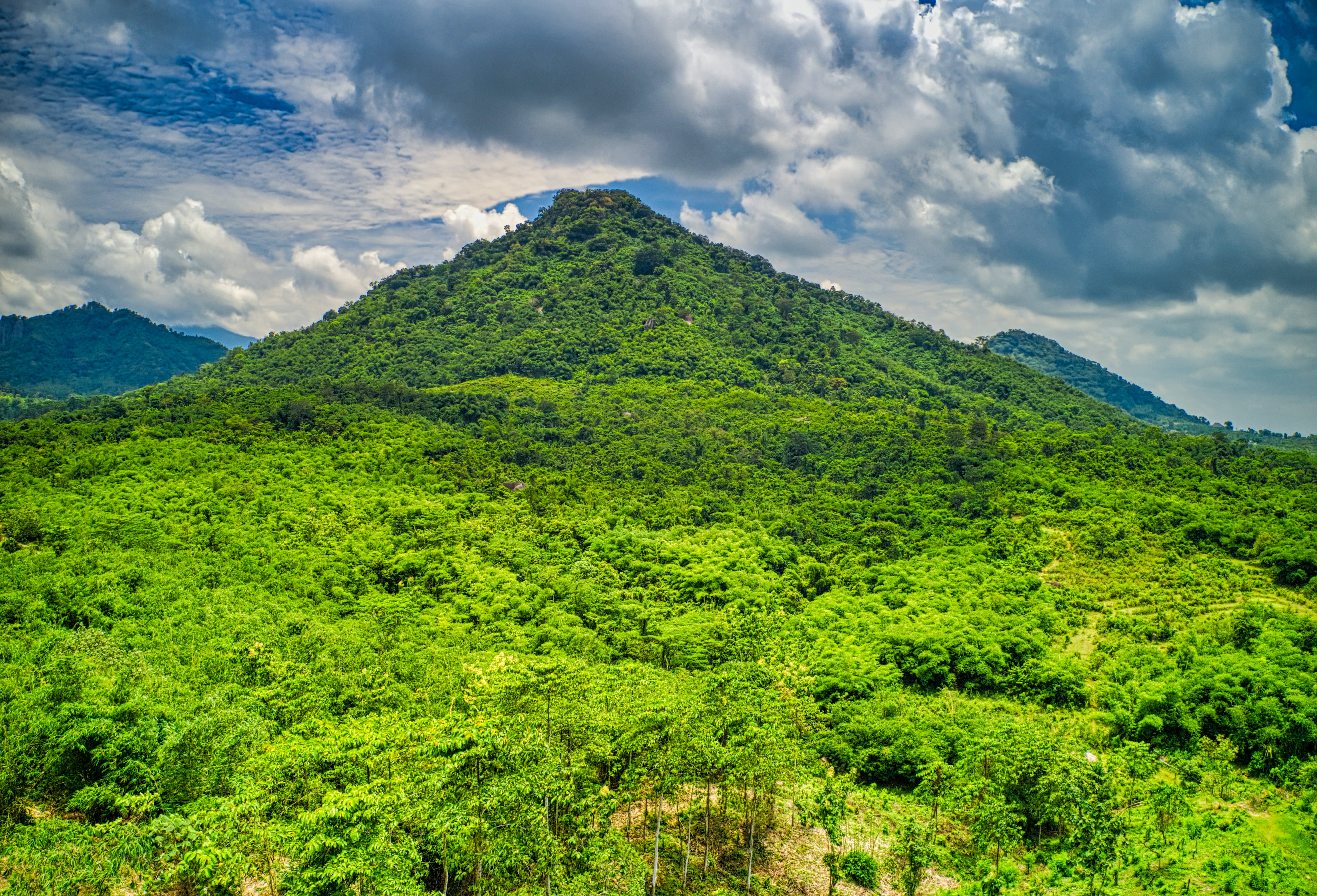 Photo of Trees on Mountain