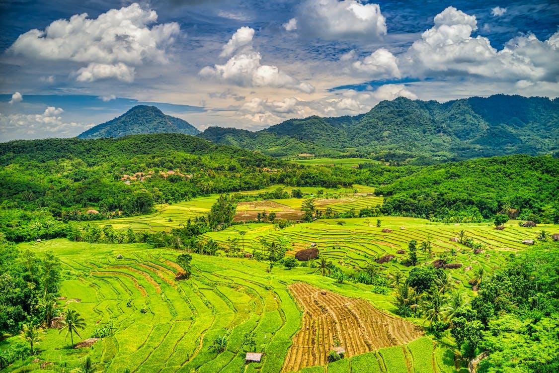 العشب المجال والجبال