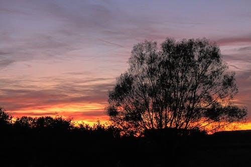 日落, 樹, 烏雲 的 免費圖庫相片